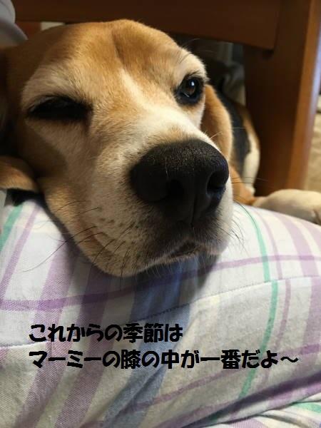 IMG_2039もじ.jpg