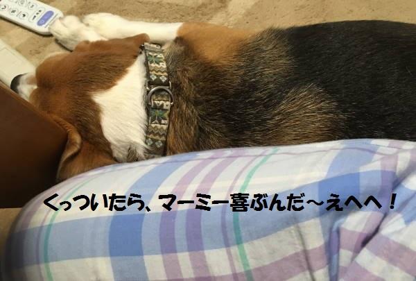 IMG_2040もじ.jpg